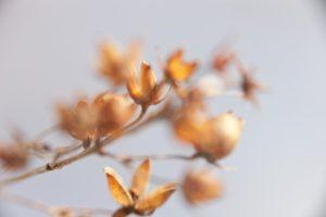 Jesień / Zima – inspiracje